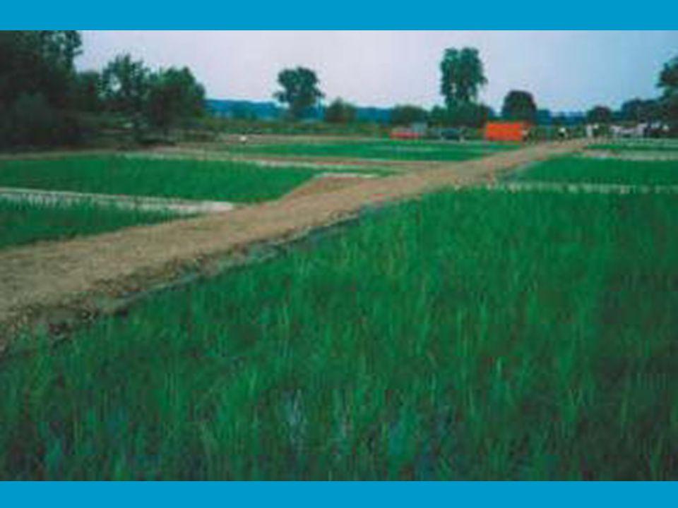 REFERENCIA LISTA •Talajnedvesség elleni szigetelés: Miskolci Húsipari Rt hűtőház, 2001, 2000 m2 (S 1mm) •Talajvíz elleni szigetelés: Budapest XIV.