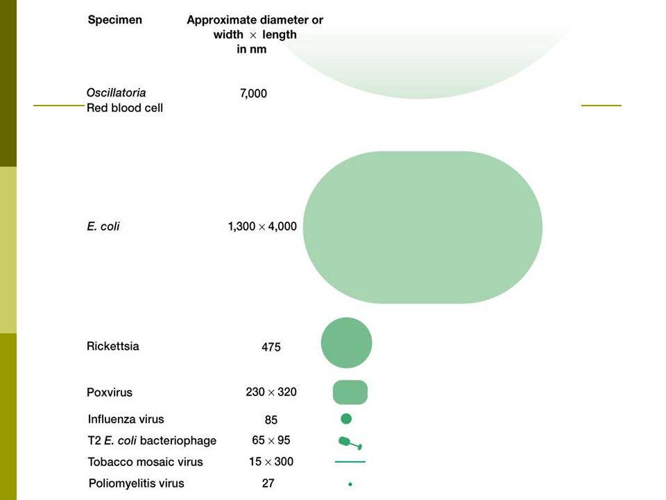 Hopanoidok: szterol analóg triterpén származékok A prokarióták citoplazmamembrán-szerkezete Koleszterol (szteroid) Bakteriohopántetrol (hopanoid)