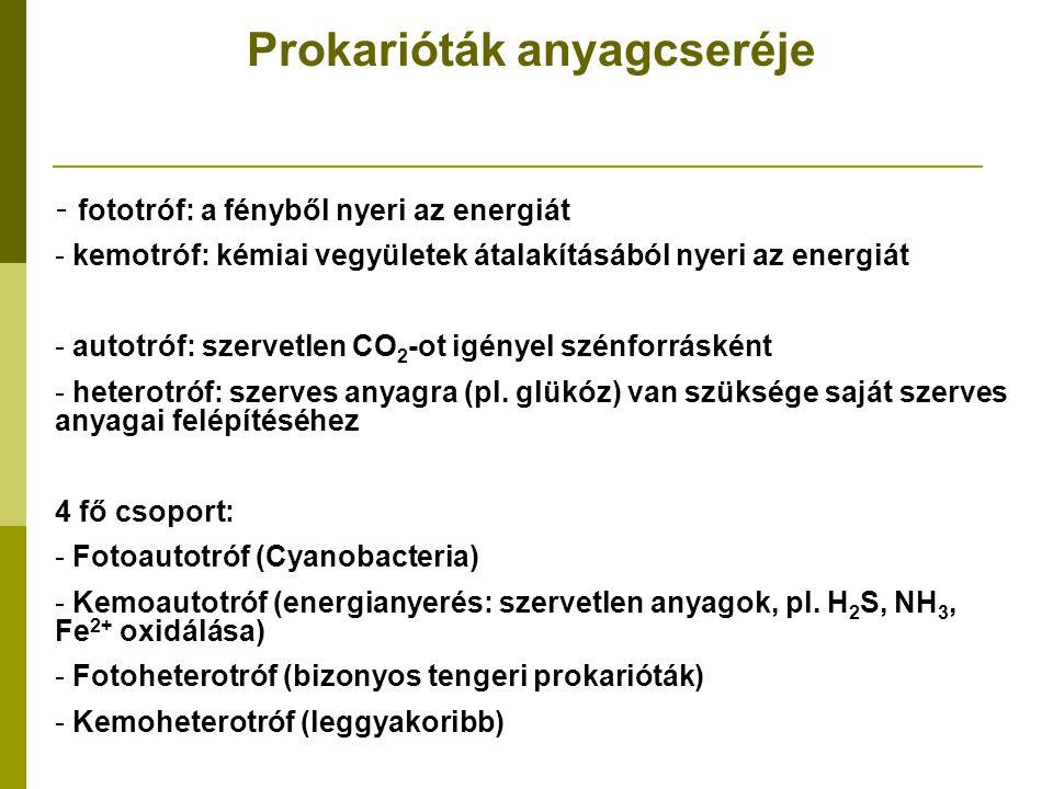 Prokarióták anyagcseréje - fototróf: a fényből nyeri az energiát - kemotróf: kémiai vegyületek átalakításából nyeri az energiát - autotróf: szervetlen