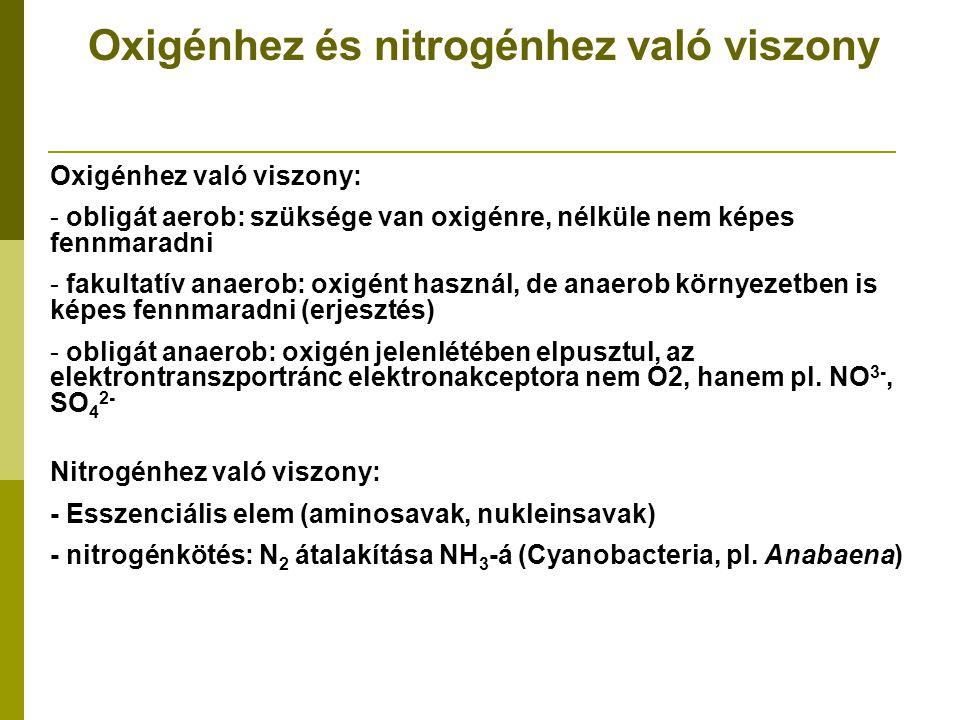 Oxigénhez és nitrogénhez való viszony Oxigénhez való viszony: - obligát aerob: szüksége van oxigénre, nélküle nem képes fennmaradni - fakultatív anaer