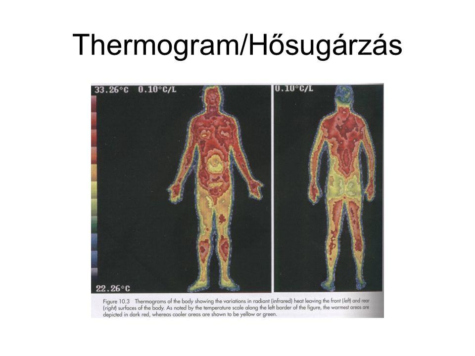 Hőleadási formák nyugalomban és terheléskor Nyugalomban a test 1.5 kcal hőt termel percenként.