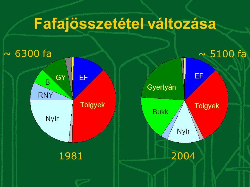 Fafajösszetétel változása 19812004 Tölgyek EF Nyír Gyertyán Bükk GY B RNY ~ 6300 fa ~ 5100 fa