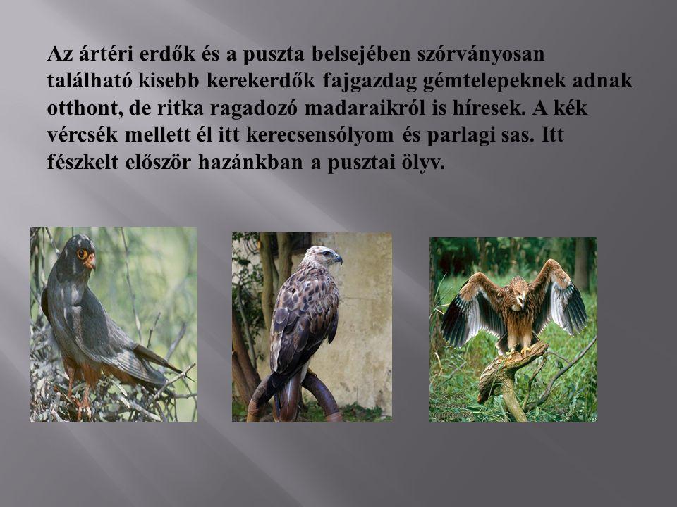 Az ártéri erdők és a puszta belsejében szórványosan található kisebb kerekerdők fajgazdag gémtelepeknek adnak otthont, de ritka ragadozó madaraikról i