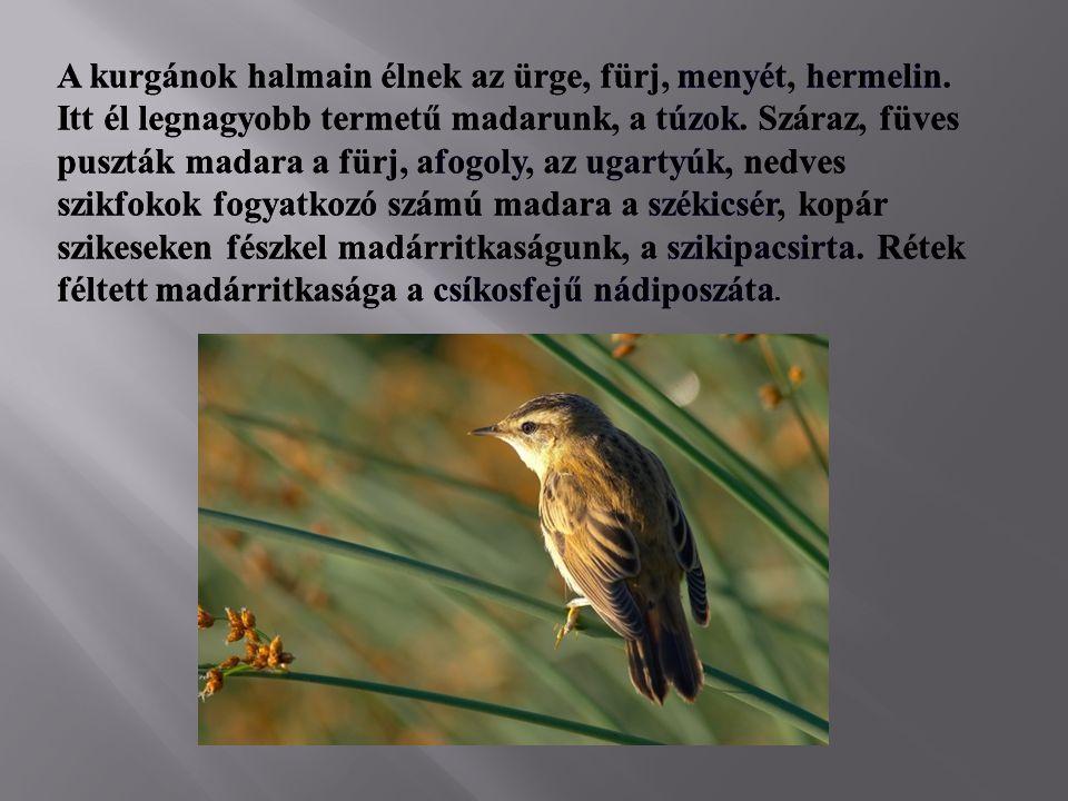 A kurgánok halmain élnek az ürge, fürj, menyét, hermelin. Itt él legnagyobb termetű madarunk, a túzok. Száraz, füves puszták madara a fürj, afogoly, a
