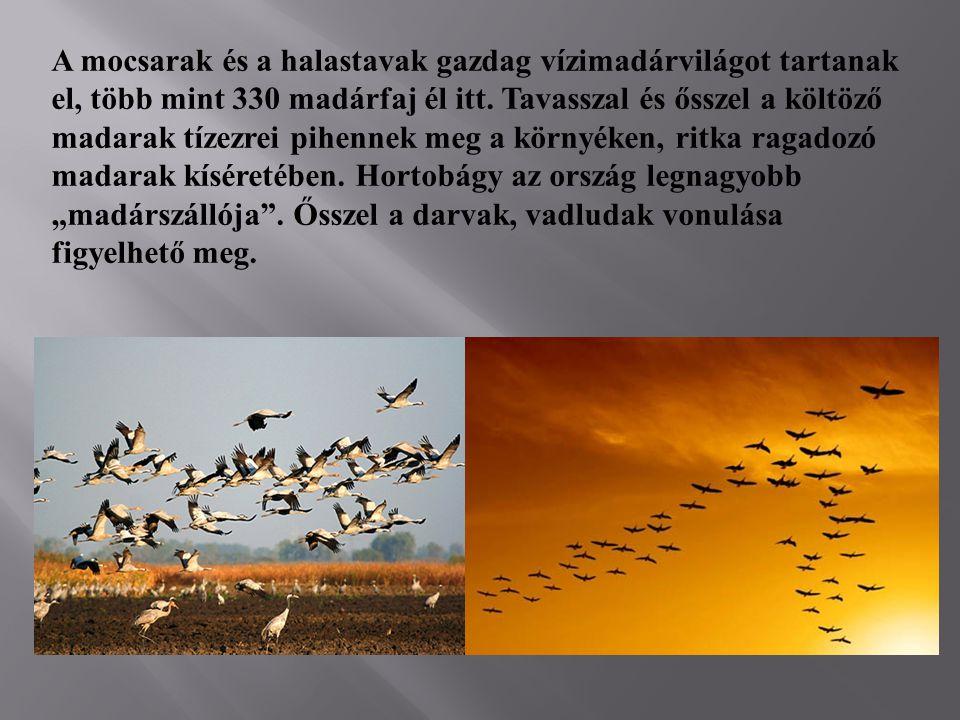 A mocsarak és a halastavak gazdag vízimadárvilágot tartanak el, több mint 330 madárfaj él itt. Tavasszal és ősszel a költöző madarak tízezrei pihennek
