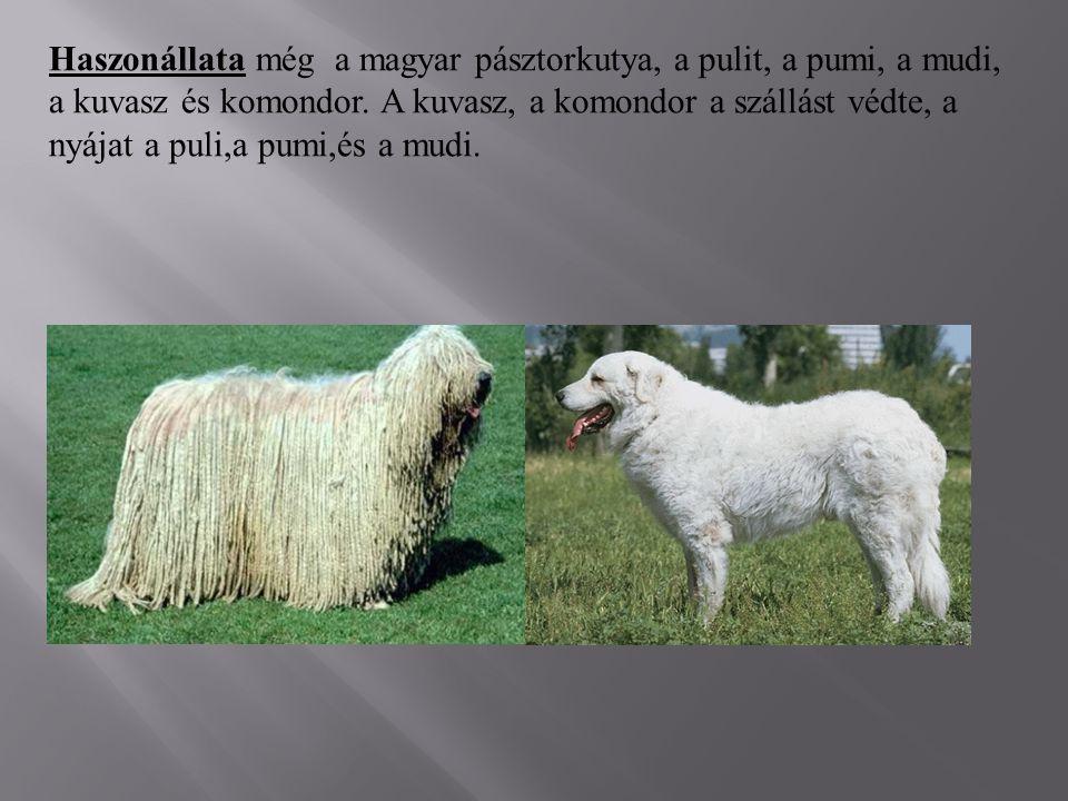 Haszonállata még a magyar pásztorkutya, a pulit, a pumi, a mudi, a kuvasz és komondor. A kuvasz, a komondor a szállást védte, a nyájat a puli,a pumi,é