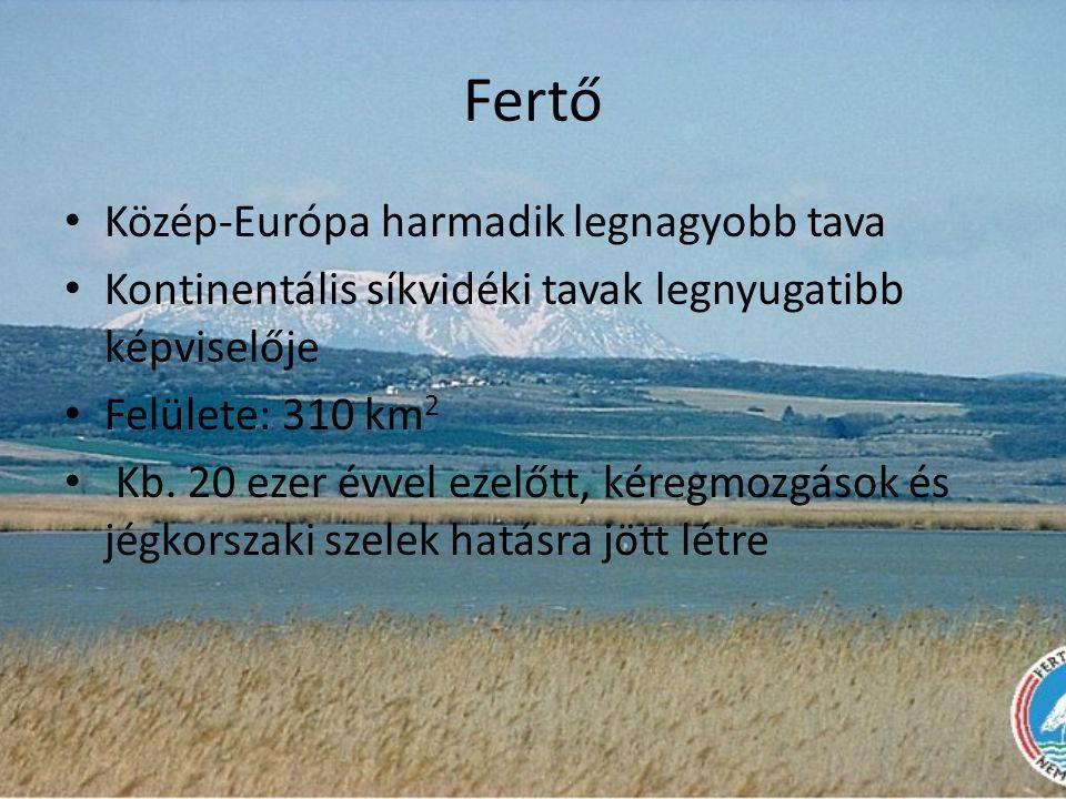 Fertő • Közép-Európa harmadik legnagyobb tava • Kontinentális síkvidéki tavak legnyugatibb képviselője • Felülete: 310 km 2 • Kb. 20 ezer évvel ezelőt