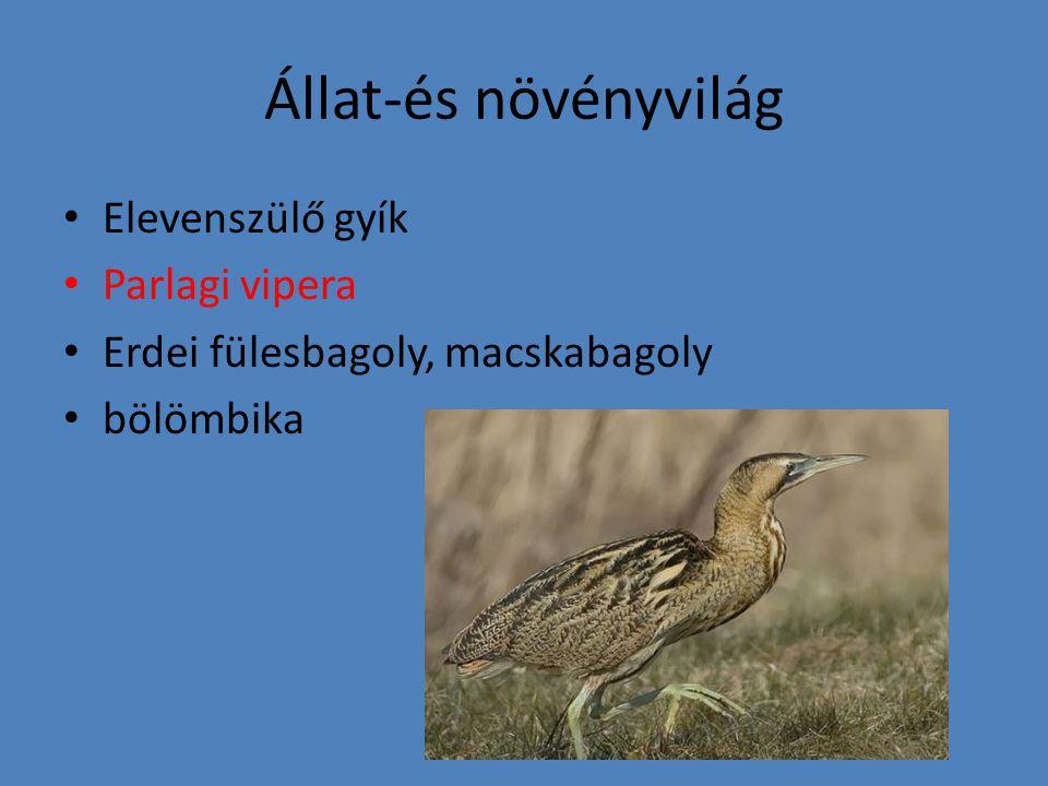 Állat-és növényvilág • Elevenszülő gyík • Parlagi vipera • Erdei fülesbagoly, macskabagoly • bölömbika