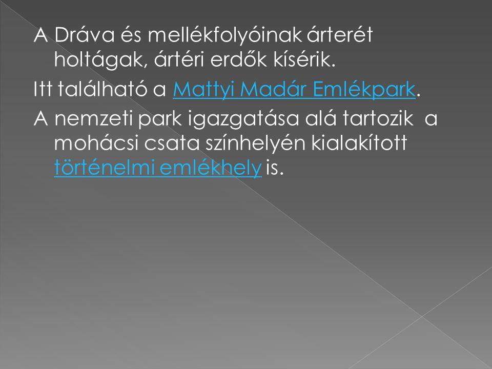 A Dráva és mellékfolyóinak árterét holtágak, ártéri erdők kísérik.