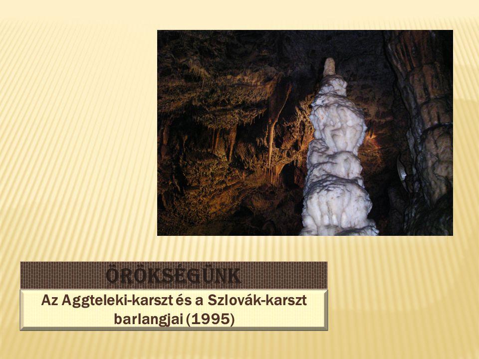  A barlangok egyedülálló ökoszisztémát alkotnak.