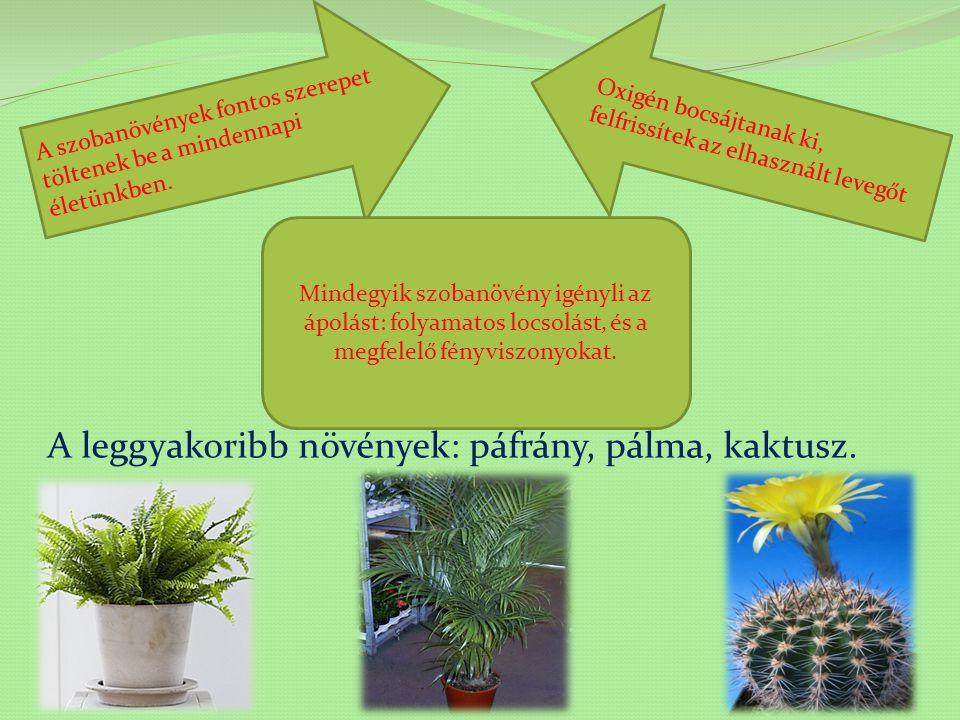 Szobanövények Tartalomjegyzék Érdekességek Tudod-e? Fogalmak Mire emlékszel?