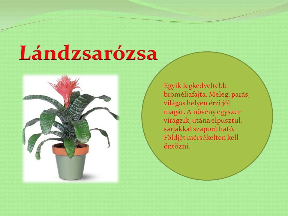 A leggyakoribb növények: páfrány, pálma, kaktusz. A szobanövények fontos szerepet töltenek be a mindennapi életünkben. Oxigén bocsájtanak ki, felfriss