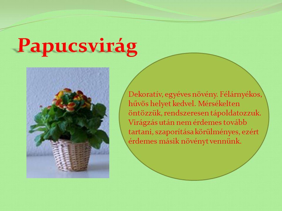 Nevét különleges leveleiről kapta. Nagyon dekoratív dísznövény. Télen levelei elfonnyadnak és leesnek, tavasszal hajt újra. Gyökértörzs osztásával sza