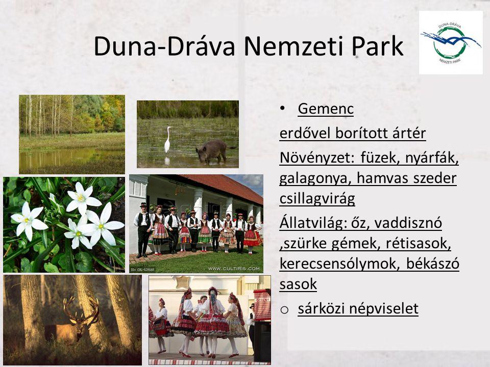 Duna-Dráva Nemzeti Park • Gemenc erdővel borított ártér Növényzet: füzek, nyárfák, galagonya, hamvas szeder csillagvirág Állatvilág: őz, vaddisznó,szü