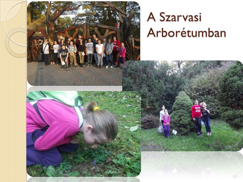 A Szarvasi Arborétumban 11