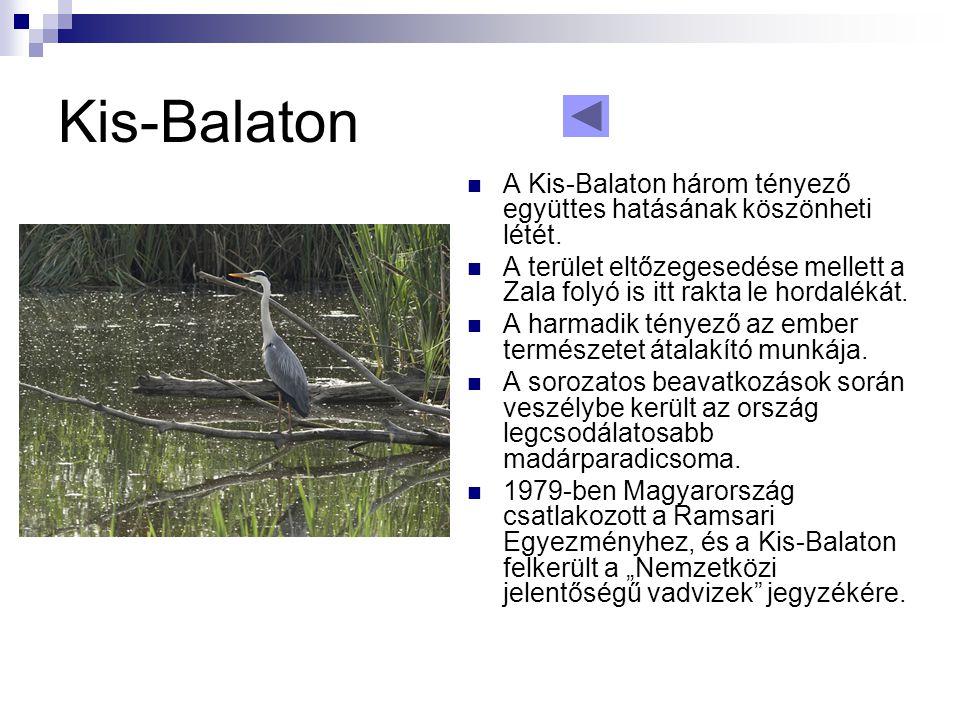 Kis-Balaton  A Kis-Balaton három tényező együttes hatásának köszönheti létét.  A terület eltőzegesedése mellett a Zala folyó is itt rakta le hordalé