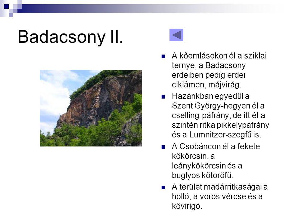 Badacsony II.  A kőomlásokon él a sziklai ternye, a Badacsony erdeiben pedig erdei ciklámen, májvirág.  Hazánkban egyedül a Szent György-hegyen él a