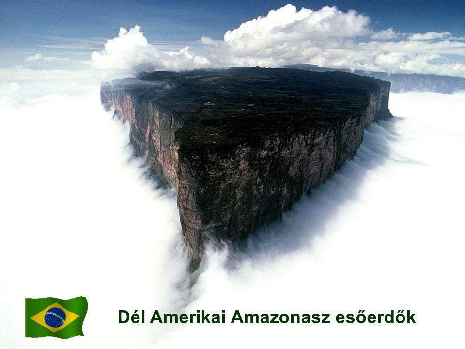 Dél Amerikai Amazonasz esőerdők