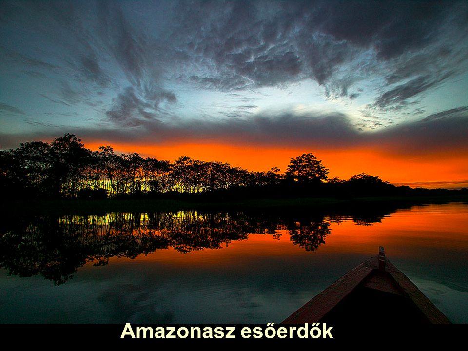 Amazonasz esőerdők
