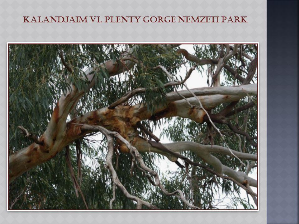 Kalandjaim VI. Plenty Gorge Nemzeti Park