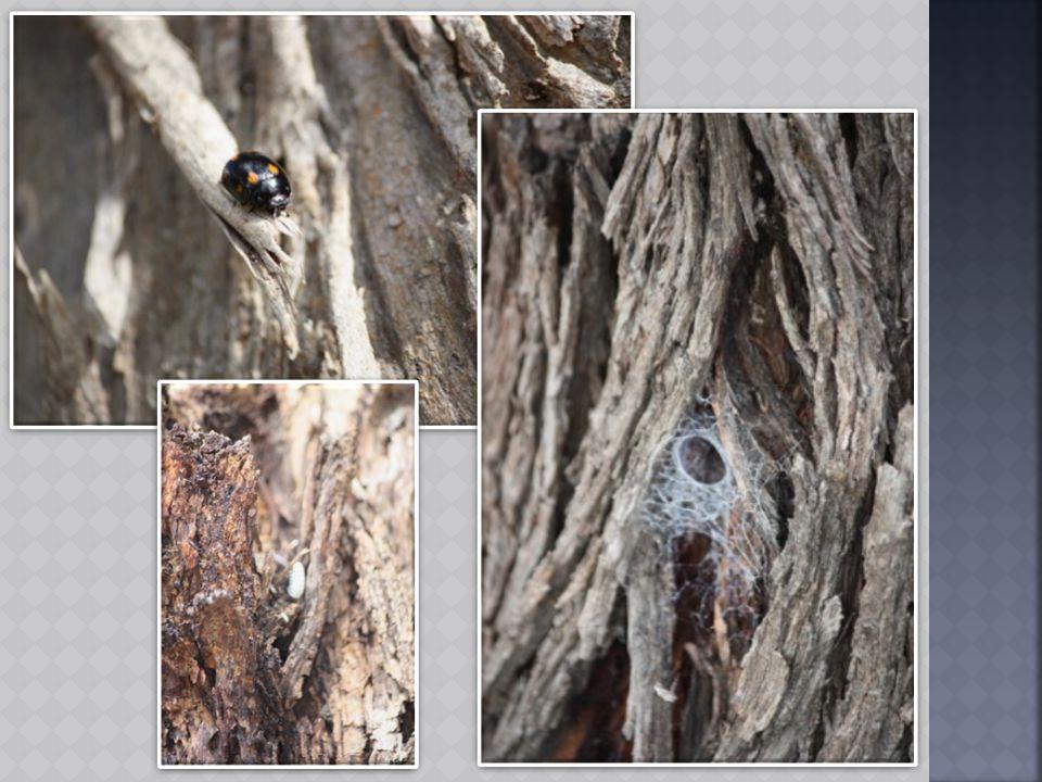 A korhadó fák jól megférnek a kövek mellett és jó szolgálatot tesznek a különböző rovaroknak, gombáknak is.
