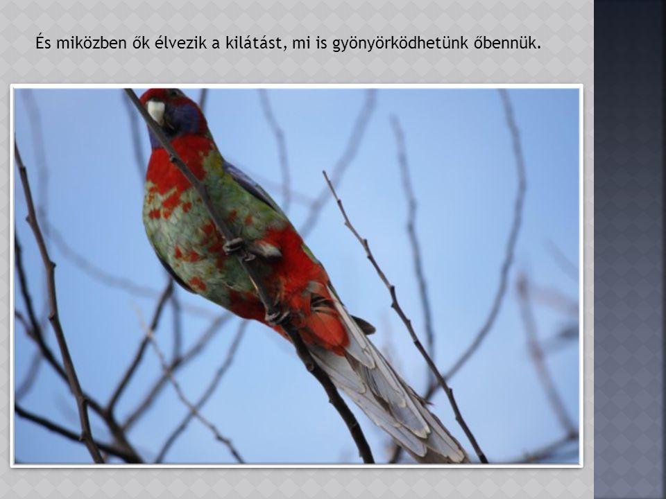 De a kiszáradt fák ágait a madarak is nagyon szeretik. Talán mert jó onnan a kilátás.
