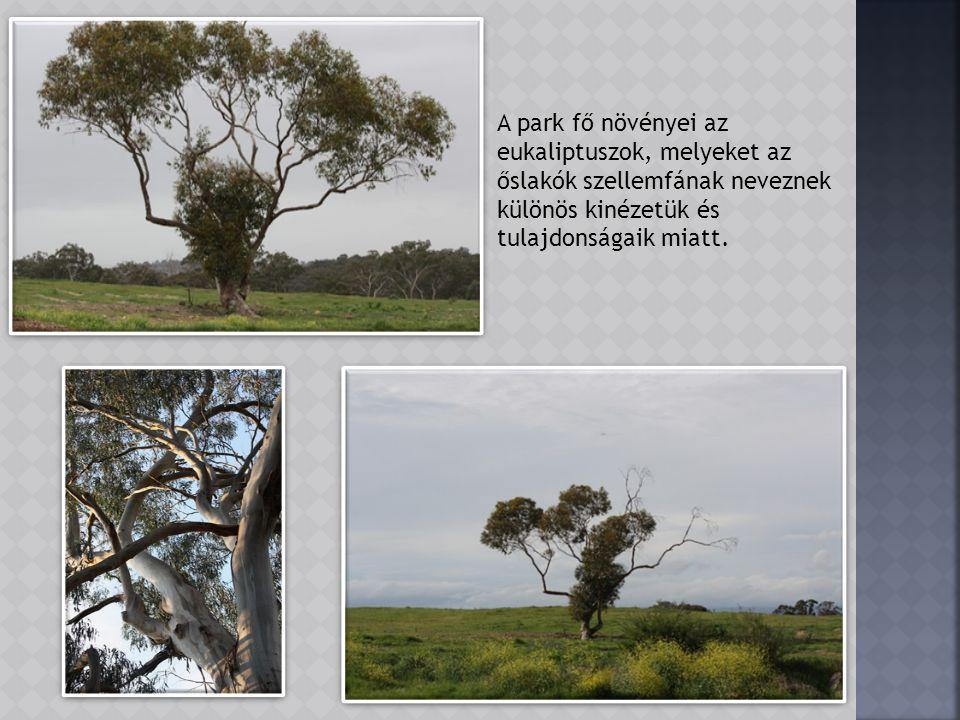 Amelyik fa azonban nem hajlandó megadni magát az elmúlásnak, az kiégett odújában friss hajtást fejleszt.