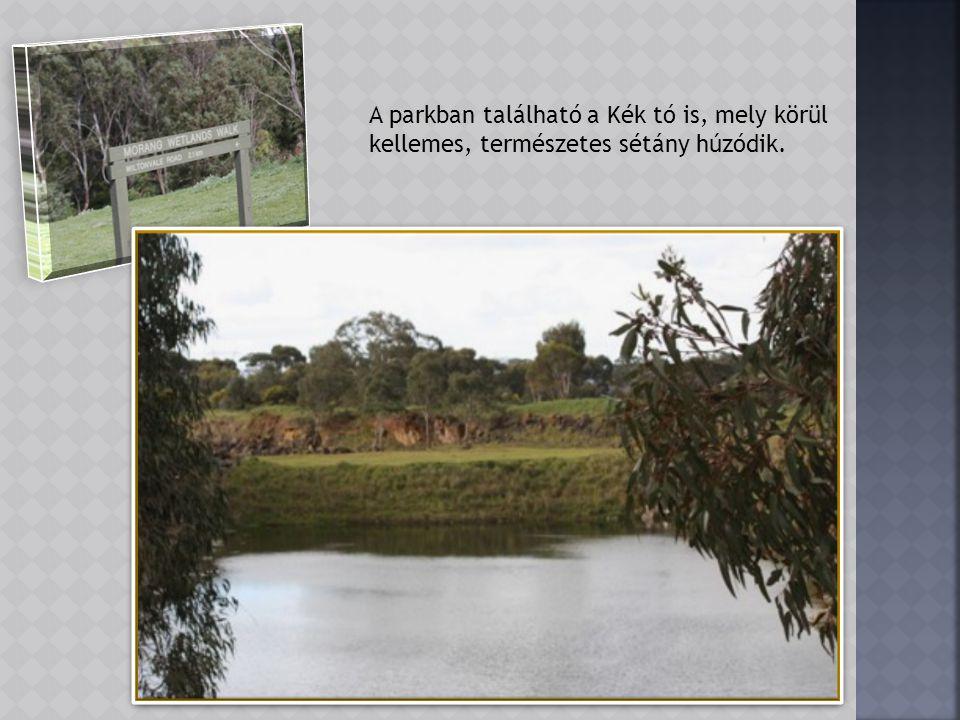 Halra vadászó Kingfisher a folyó fölé hajló száraz ágon.