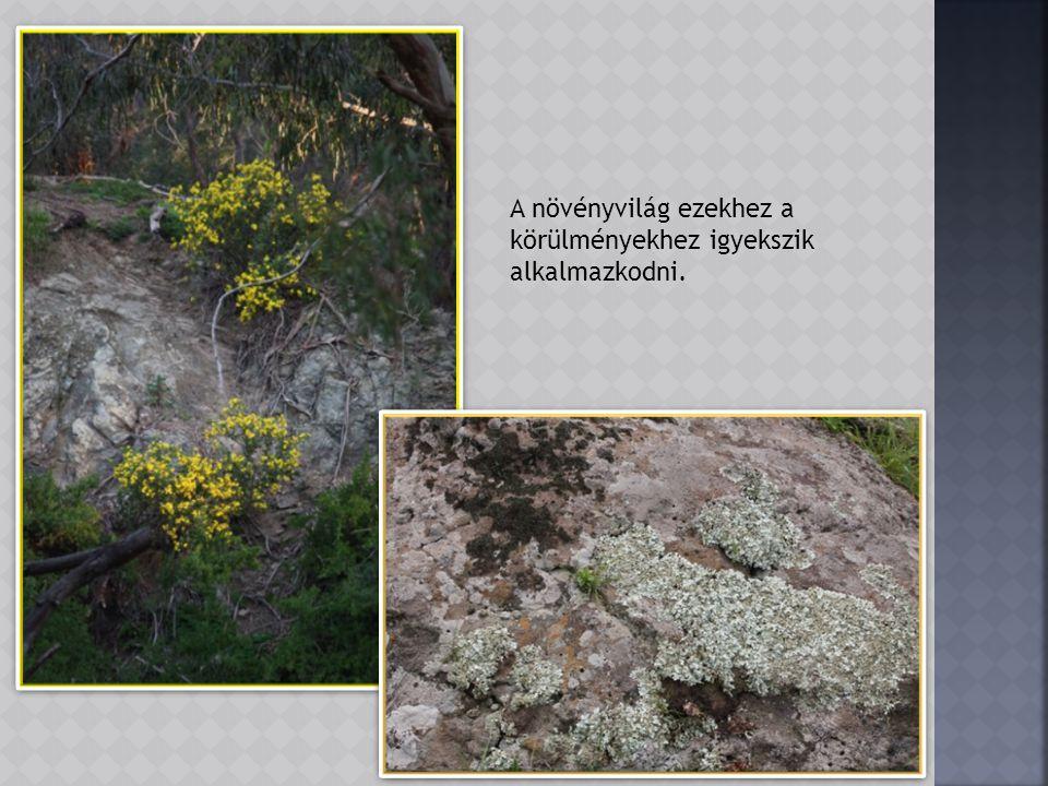 A park fő növényei az eukaliptuszok, melyeket az őslakók szellemfának neveznek különös kinézetük és tulajdonságaik miatt.