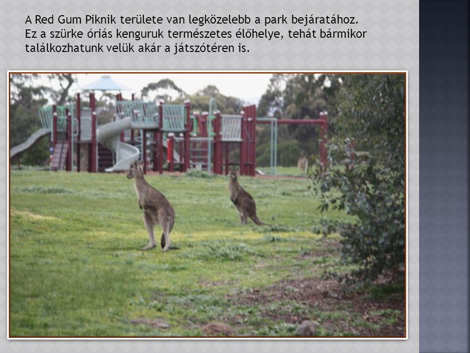 A parkot kerítés veszi körül. Nyugati oldalánál a kerítésen és a műúton túl jól látszanak a lakóházak. A kenguruk a parkon belől vannak, az un. Red Gu
