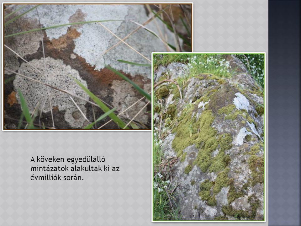 A hatalmas kőtömbök közt rengeteg nyúl talál jó búvóhelyet.