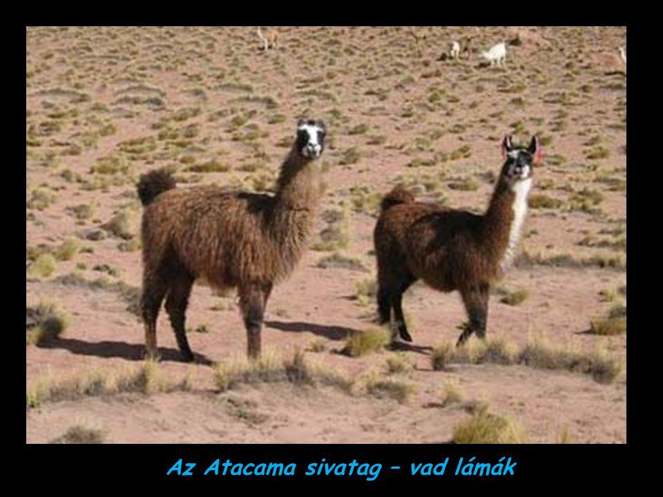 Az Atacama sivatag – Észak-Chile A Föld legszárazabb helye