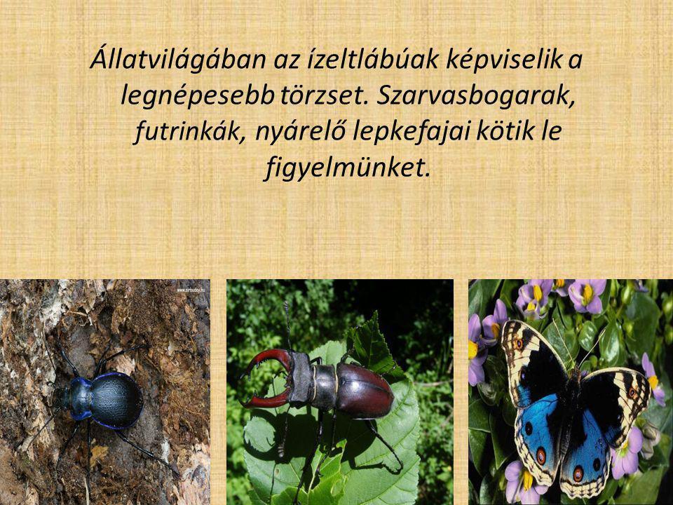 Állatvilágában az ízeltlábúak képviselik a legnépesebb törzset. Szarvasbogarak, futrinkák, nyárelő lepkefajai kötik le figyelmünket.