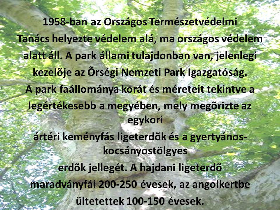 1958-ban az Országos Természetvédelmi Tanács helyezte védelem alá, ma országos védelem alatt áll. A park állami tulajdonban van, jelenlegi kezelõje az