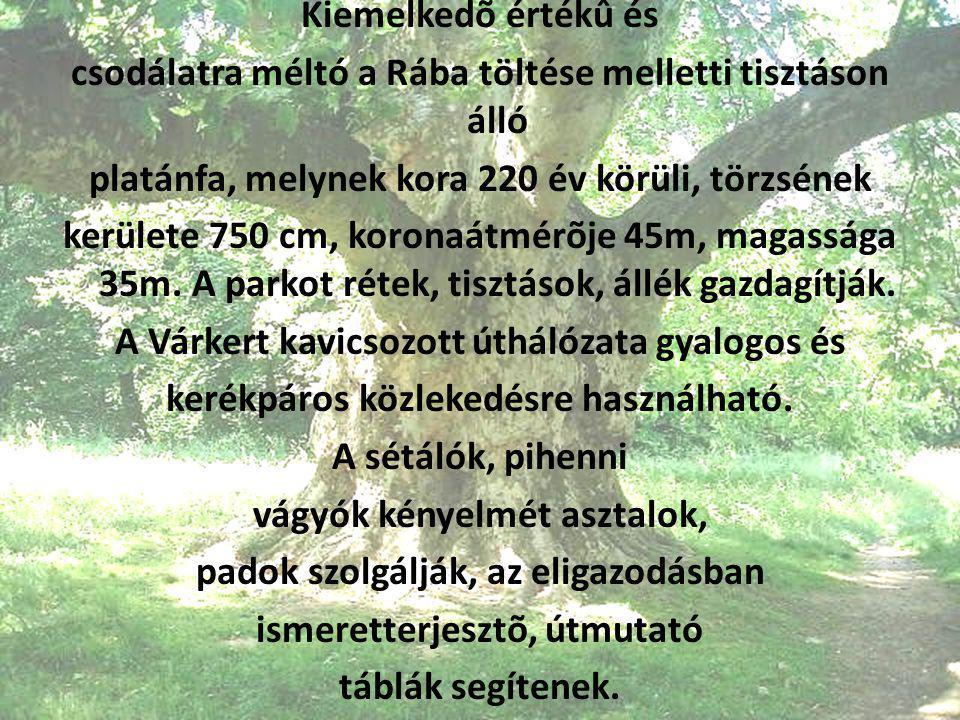 Kiemelkedõ értékû és csodálatra méltó a Rába töltése melletti tisztáson álló platánfa, melynek kora 220 év körüli, törzsének kerülete 750 cm, koronaát