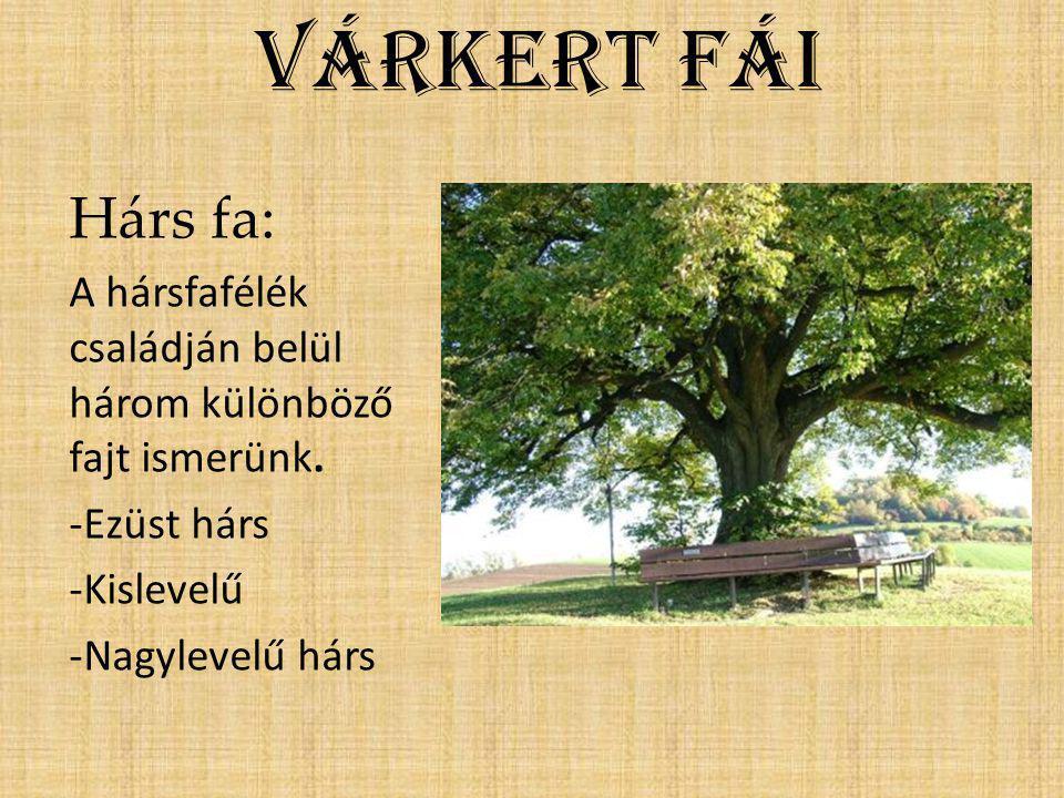 Várkert fái Hárs fa: A hársfafélék családján belül három különböző fajt ismerünk. -Ezüst hárs -Kislevelű -Nagylevelű hárs