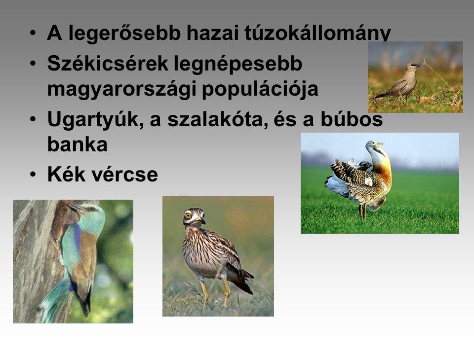•A legerősebb hazai túzokállomány •Székicsérek legnépesebb magyarországi populációja •Ugartyúk, a szalakóta, és a búbos banka •Kék vércse