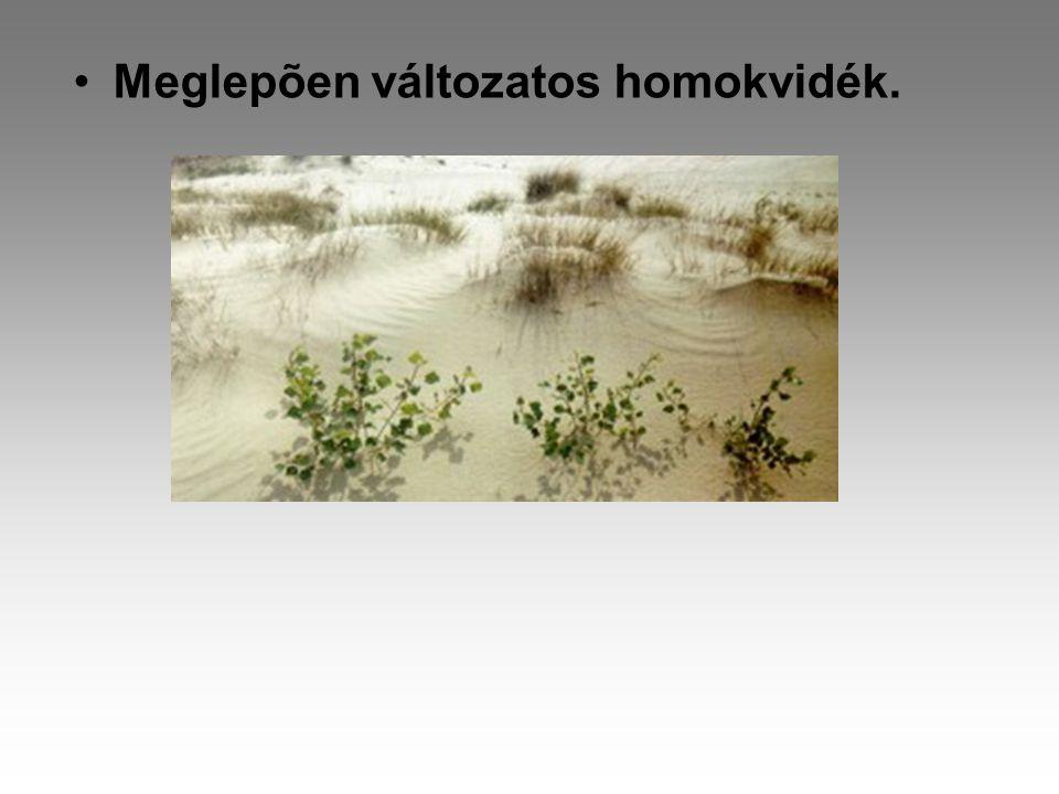 •Meglepõen változatos homokvidék.