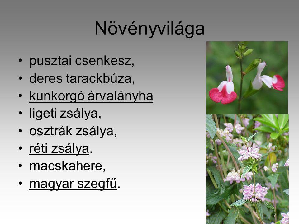 Növényvilága •pusztai csenkesz, •deres tarackbúza, •kunkorgó árvalányha •ligeti zsálya, •osztrák zsálya, •réti zsálya.
