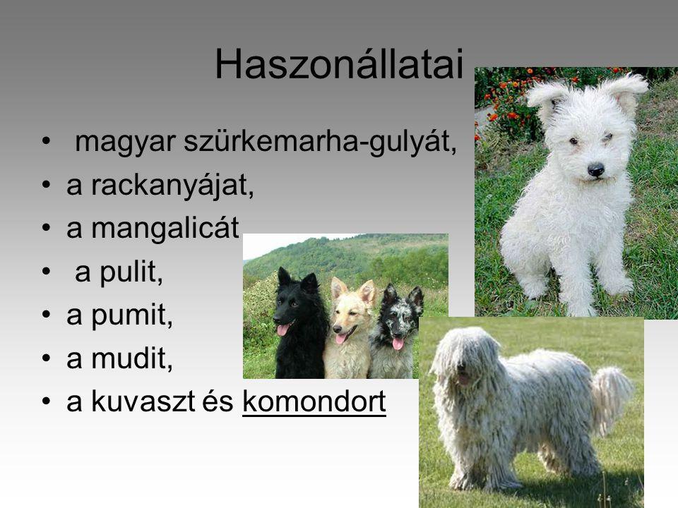 Haszonállatai • magyar szürkemarha-gulyát, •a rackanyájat, •a mangalicát • a pulit, •a pumit, •a mudit, •a kuvaszt és komondort