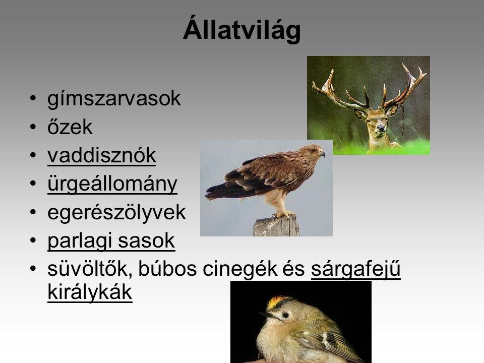 Állatvilág •gímszarvasok •őzek •vaddisznók •ürgeállomány •egerészölyvek •parlagi sasok •süvöltők, búbos cinegék és sárgafejű királykák