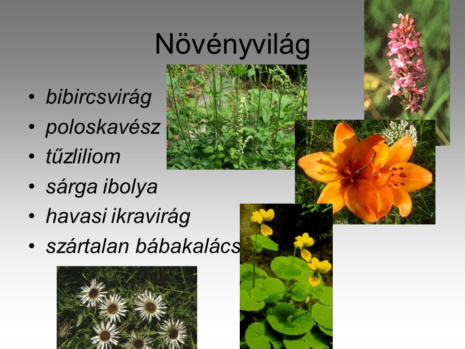 Növényvilág •bibircsvirág •poloskavész •tűzliliom •sárga ibolya •havasi ikravirág •szártalan bábakalács