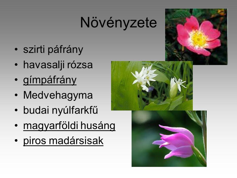 Növényzete •szirti páfrány •havasalji rózsa •gímpáfrány •Medvehagyma •budai nyúlfarkfű •magyarföldi husáng •piros madársisak