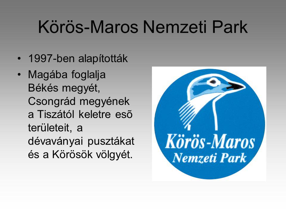 Körös-Maros Nemzeti Park •1997-ben alapították •Magába foglalja Békés megyét, Csongrád megyének a Tiszától keletre esõ területeit, a dévaványai pusztákat és a Körösök völgyét.