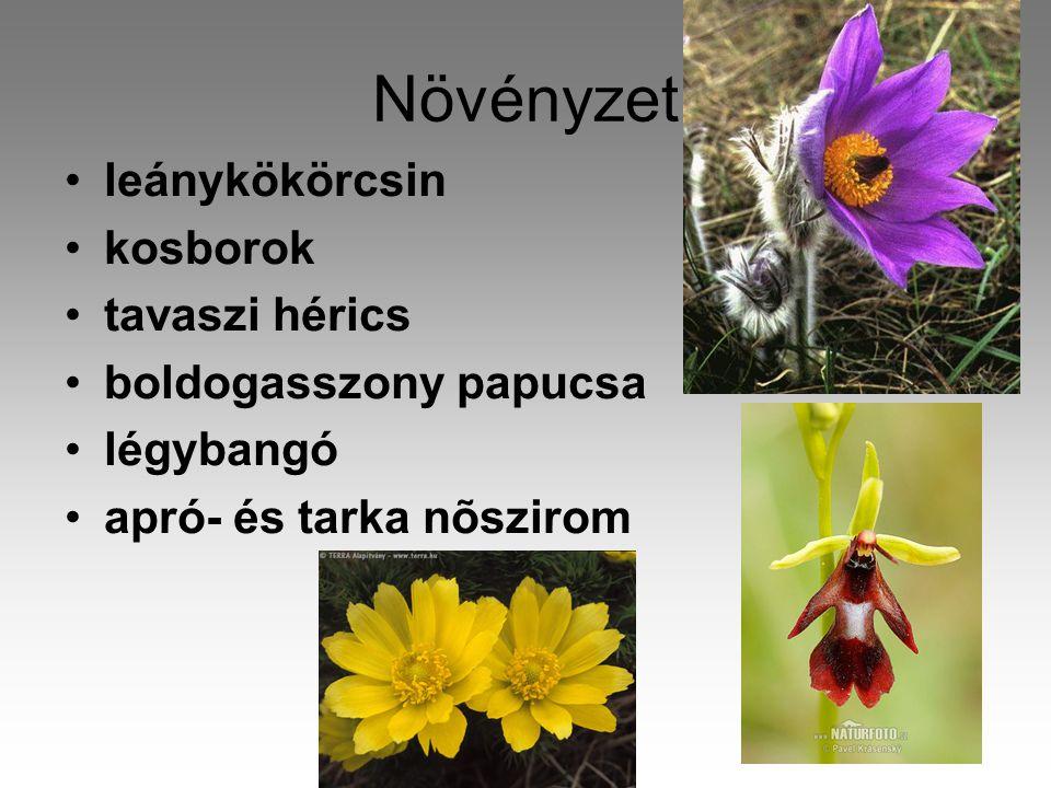 Növényzet •leánykökörcsin •kosborok •tavaszi hérics •boldogasszony papucsa •légybangó •apró- és tarka nõszirom