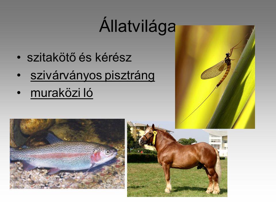 Állatvilága •szitakötő és kérész • szivárványos pisztráng • muraközi ló