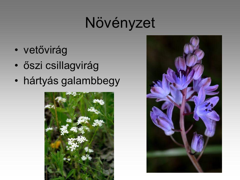 Növényzet •vetővirág •őszi csillagvirág •hártyás galambbegy