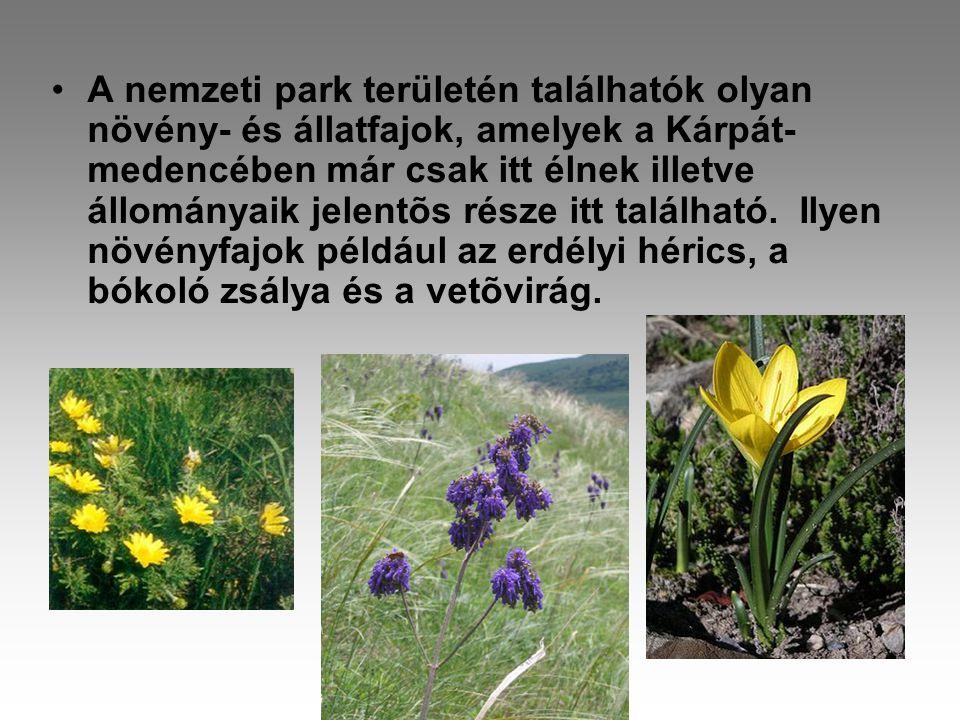 •A nemzeti park területén találhatók olyan növény- és állatfajok, amelyek a Kárpát- medencében már csak itt élnek illetve állományaik jelentõs része itt található.