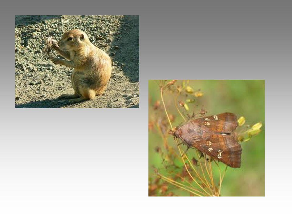 Állatvilága •füles kuvik •gyurgyalag •közép fakopáncs