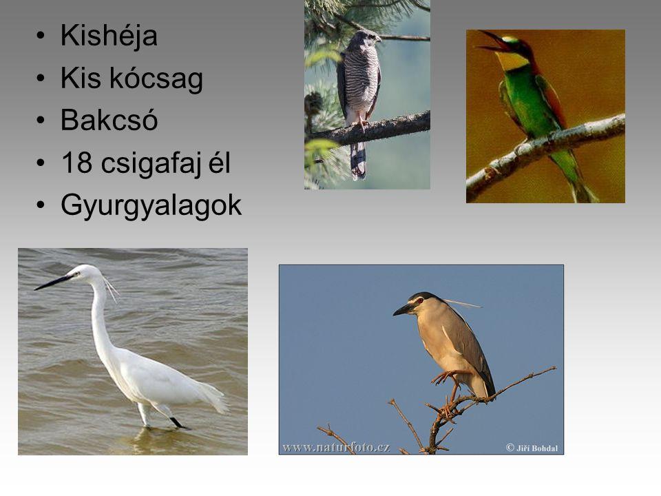 Aggteleki Nemzeti Park •1985-ben jött létre